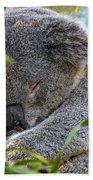Sleeping Koala - Canberra - Australia Beach Sheet