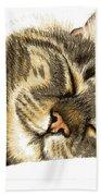 Sleeping Tabby Cat  Beach Towel