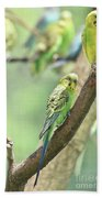 Small Budgie Birds With Beautiful Colored Feathers Beach Towel