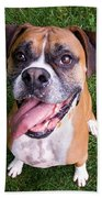 Smiling Boxer Dog Beach Towel