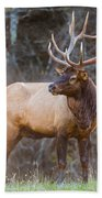 Smoky Mountain Elk II - North Carolina's Cataloochee Valley Wildlife Beach Towel