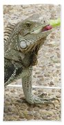Snacking Iguana On A Concrete Walk Way Beach Towel