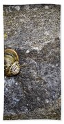 Snail At Ballybeg Priory County Cork Ireland Beach Towel