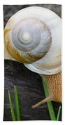 Snail Beach Towel