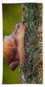 Snail Climbing The Tall Grass Beach Towel