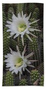 Snake Cactus Flowers Beach Towel