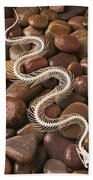Snake Skeleton  Beach Towel by Garry Gay