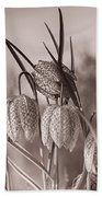 Snake's Head Fritillary  Beach Towel
