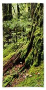 Snoqualmie National Forest Beach Towel