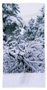 Snow Burdened Tree In The Flatirons Beach Towel