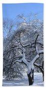 Snow-covered Sunlit Apple Trees Beach Towel