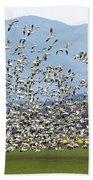 Snow Geese Exodus Beach Towel