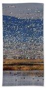 Snow Geese Landing Beach Towel