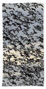 Snow Geese Spring Migration Beach Towel