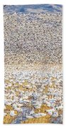Snow Geese Take Off 1 Beach Towel