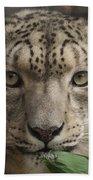 Snow Leopard 13 Beach Towel