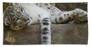 Snow Leopard Nap Beach Towel