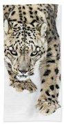 Snow Leopard On The Prowl X Beach Towel