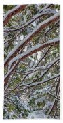 Snow On The Branches Beach Towel