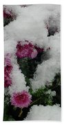 Snowy Chrysanthemums Beach Towel