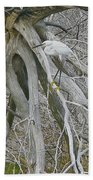 Snowy Egret - Egretta Thula - On Marsh Tangle Beach Towel