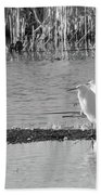 Snowy Egret - 1 Beach Towel