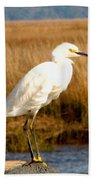 Snowy Egret 2 Beach Towel