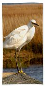 Snowy Egret 3 Beach Towel