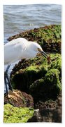 Snowy Egret  Series 2  1 Of 3  The Catch Beach Towel