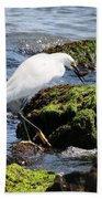 Snowy Egret  Series 2  2 Of 3  Preparing Beach Towel