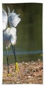 Snowy Egret Stretch 4280-080917-3cr Beach Towel