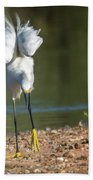 Snowy Egret Stretch 4280-080917-3cr Beach Sheet