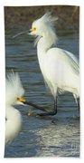 Snowy Egrets Beach Towel