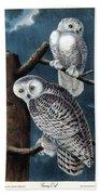 Snowy Owl Audubon Birds Of America 1st Edition 1840 Royal Octavo Plate 28 Beach Towel