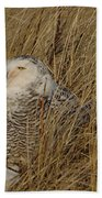 Snowy Owl In Grass Beach Towel