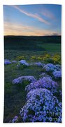 Snowy Phlox Sunset Beach Towel
