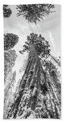 Snowy Sequoias At Calaveras Big Tree State Park Black And White 6 Beach Towel