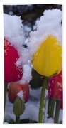 Snowy Tulips Beach Towel