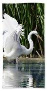 Snowy White Egret In The Wetlands Beach Towel