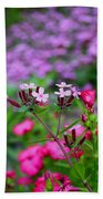 Soapwort And Pinks Beach Towel