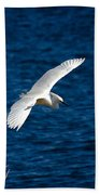 Soaring Snowy Egret  Beach Towel