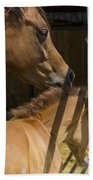Socializing Amongst Horses Beach Towel