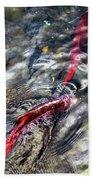 Sockeye Salmon, Alaska, August 2015 Beach Towel
