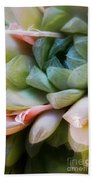 Soft Natural Succulents Beach Towel