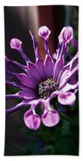 South African Daisy Beach Towel