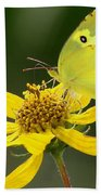 Southern Dogface Butterfly Beach Towel