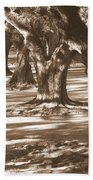 Southern Sunlight On Live Oaks Beach Towel