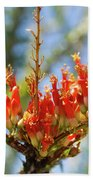 Southwest Ocotillo Bloom Beach Towel