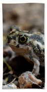 Spadefoot Beach Towel