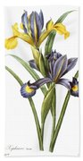 Spanish Iris Beach Towel